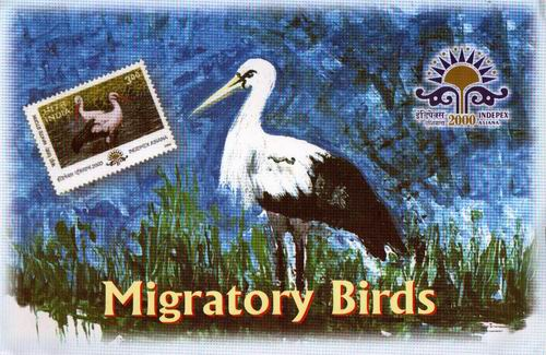 India Stamps 2000 Presentation Pack Migratory Birds Of India