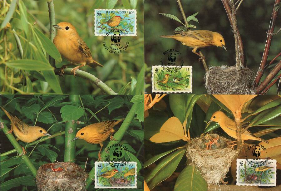 WWF Barbados 1991 Maxi Cards Yellow Warbler Gold Forest Singer