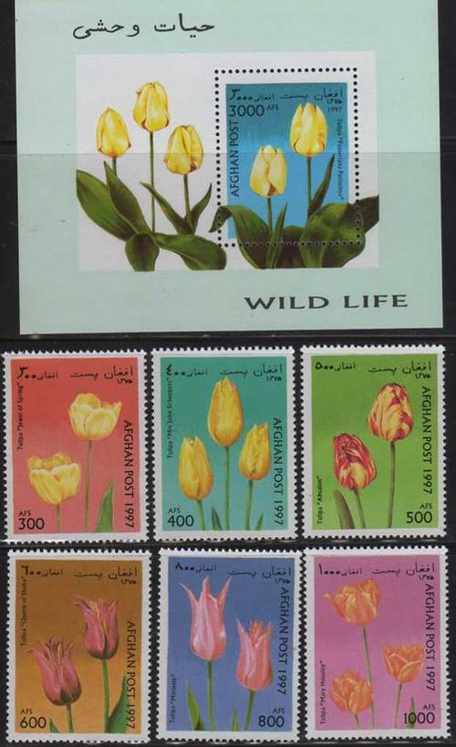 Afghanistan 1997 S/Sheet & Stamps Flowers Tulips