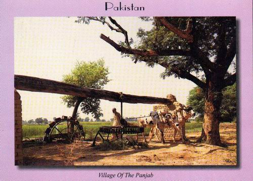 Pakistan Beautiful Postcard Village Of Punjab