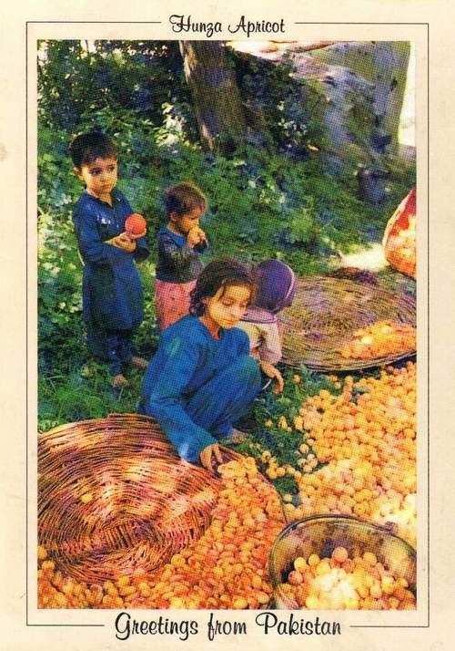 Pakistan Beautiful Postcard Children Selling Apricot Hunza