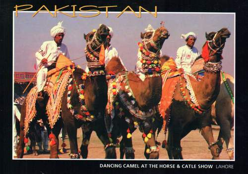 Pakistan Beautiful Postcard Camel Dance at Horse & Cattle Show