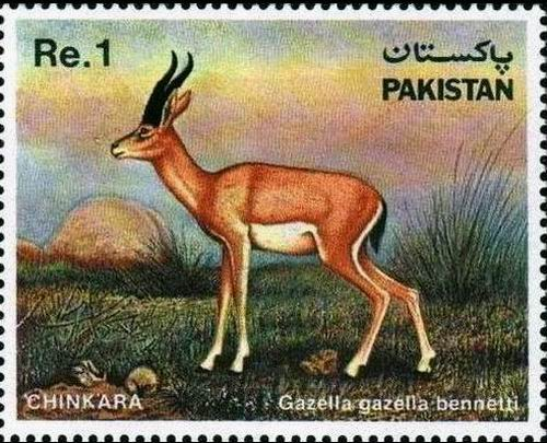 Pakistan Stamps 1983 Chinkara Gazelle