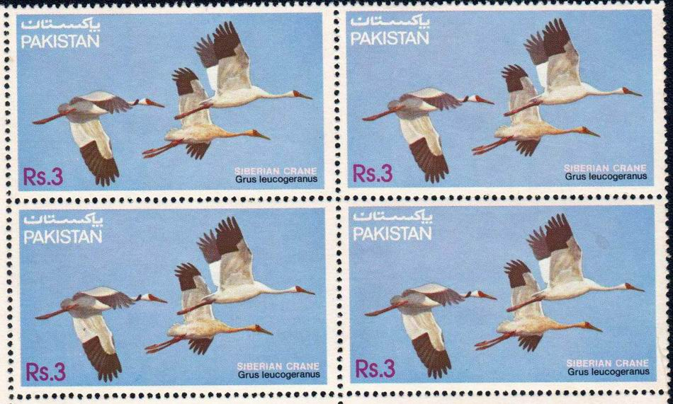 Pakistan Stamps 1983 Wildlife Siberian Crane
