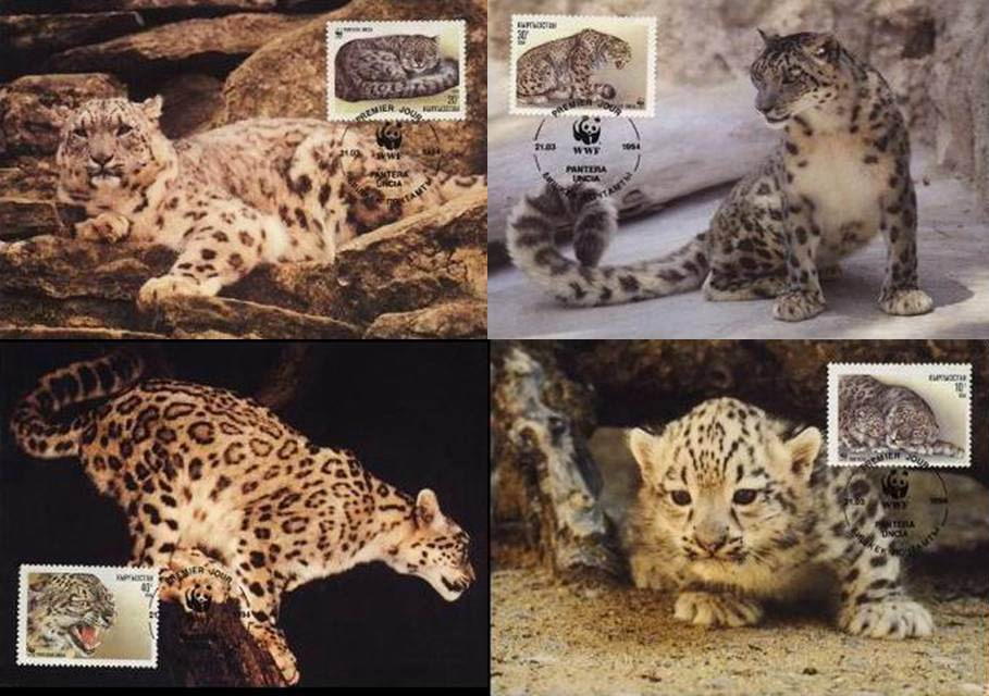 WWF Kyrgyzstan 1994 Beautiful Maxi Cards Snow Leopard