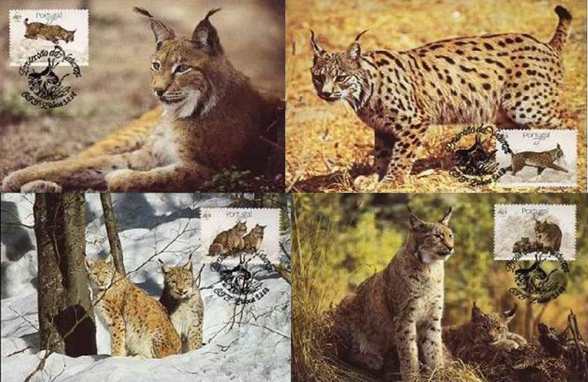 WWF Portugal 1988 Beautiful Maxi Cards Lynx Wild Cat