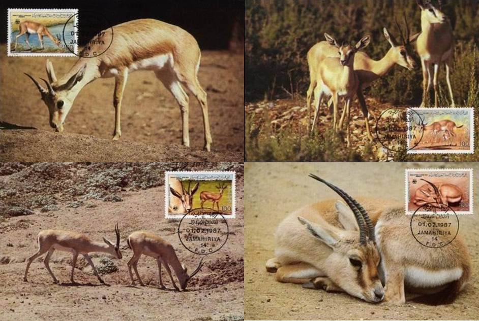 WWF Libya 1987 Beautiful Maxi Cards Gazelle