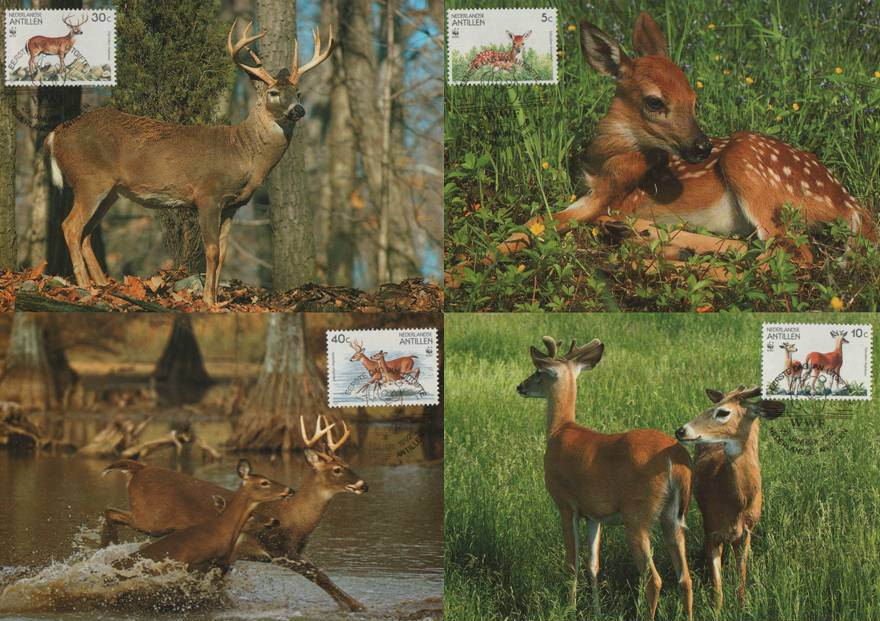 WWF Antillen 1992 Beautiful Maxi Cards Deer