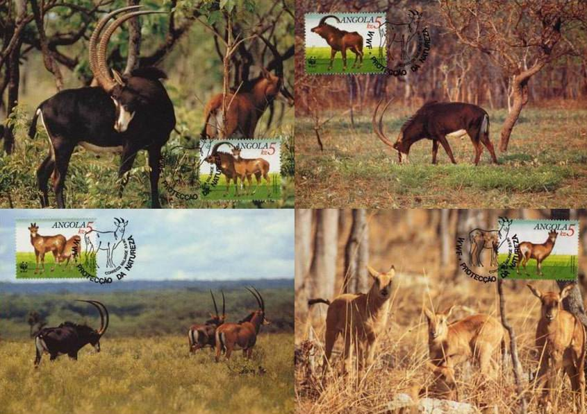 WWF Angola 1990 Beautiful Maxi Cards Giant Sable Antelope