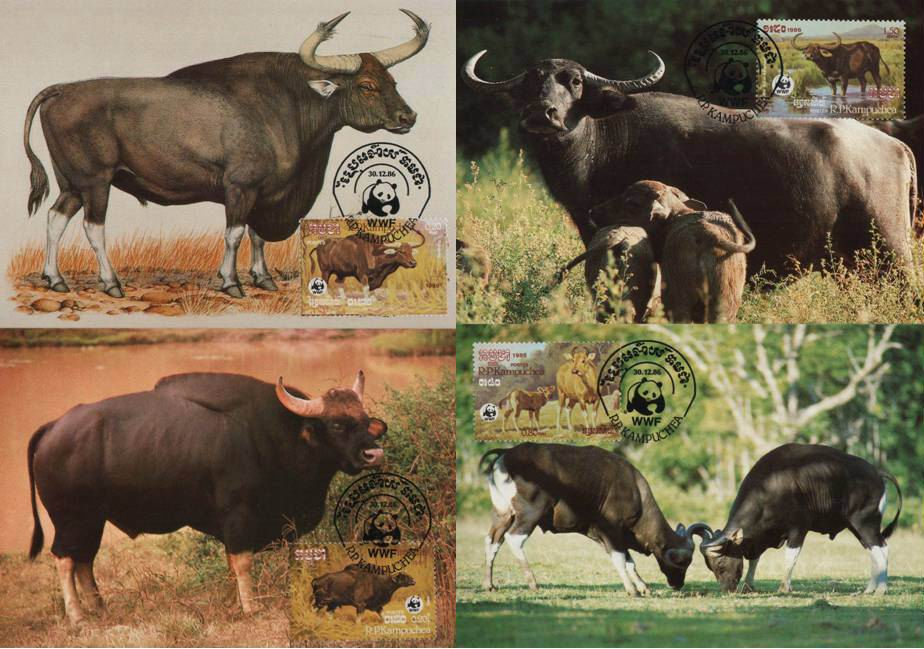 WWF Kampuchea 1986 Beautiful Maxi Cards Buffalos