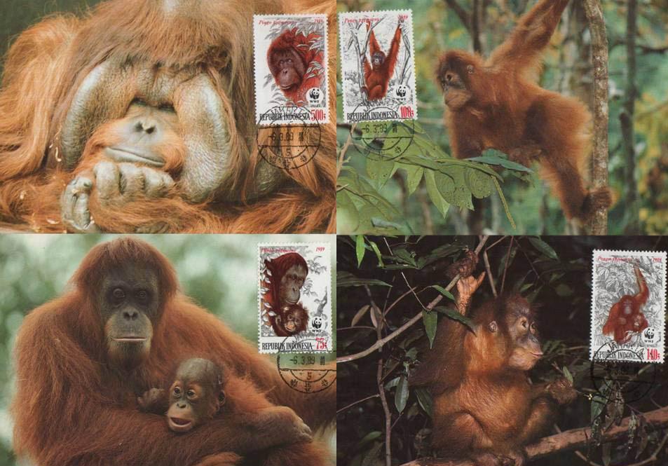 WWF Indonesia 1989 Beautiful Maxi Cards Orangutan