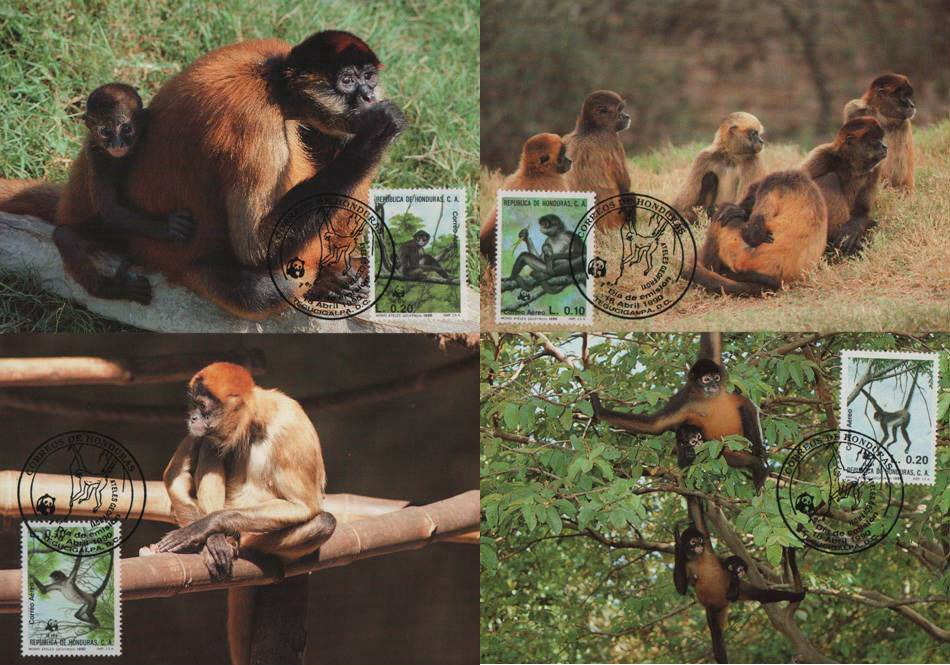 WWF Honduras 1990 Beautiful Maxi Cards Spider Monkey