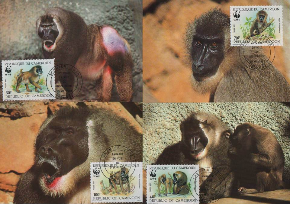 WWF Cameroun 1988 Beautiful Maxi Cards Drill Largest Monkeys