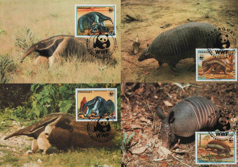 WWF Paraguay 1985 Beautiful Maxi Cards Giant Anteater