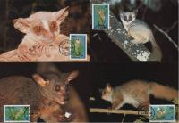 WWF Tanzania 1989 Beautiful Maxi Cards Lesser Bushbaby